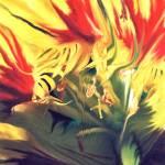 """""""Flower    12115"""" by watersedge"""
