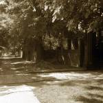 """TREE LINED WALK, SUMMER, Sepia"" by FinneganPhotos"
