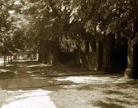 TREE LINED WALK, SUMMER, Sepia