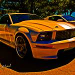 """""""Ford Named My Mustang Shelby"""" by chassinklier"""