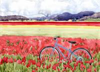 Bicycling through the tulips