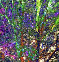 PENANG TREES, Abstract Trees, v17, Edit D