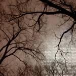 """""""Glow in the fog"""" by StillMemory"""