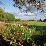 """""""Flower Crop in Willingham"""" by DerekL"""