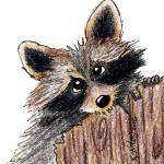 """Raccoon"" by KiniArt"