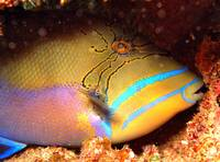 TriggerFish Close