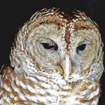 """""""Wise Owl"""" by URSPIX"""