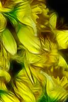 Abstract Yellow Daffodil Bouquet 24x36