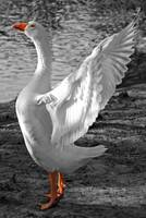 Spread Your Wings in Black and White