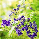 """""""purple shower"""" by URSPIX"""