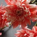 """Pink Chrysanths"" by Machin"