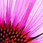 """""""Macro Floral Abstract"""" by waynelogan"""