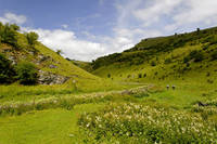 Cressbrook Dale near to Wardlow (29353-RDA)