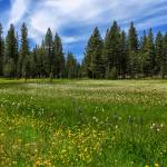 """A Meadow In Lassen County"" by jameseddy"