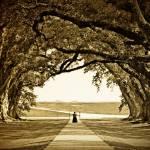 """Oak Alley Vintage"" by masonwood"