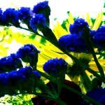 """Fluorescence"" by AprilO"