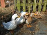 PetDucks gallery