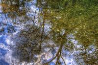 Reflections of a Forest