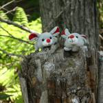 """Mice in the forest"" by Albertphoto"