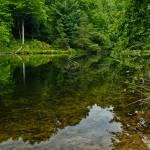 """Rose Lake reflections"" by julieandel"