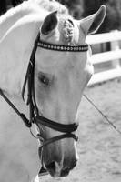Nancy Dressage B&W033
