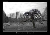 Nature of Death