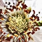 """""""Recent art From Flower to Berry"""" by ArtbyMaryJaneGM"""