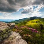 """Roan Mountain Rhododendron Bloom"" by DAPhoto"
