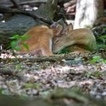 """Sleeping Buck"" by dteetor2"