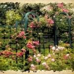 """Vintage Trellis"" by JessicaJenney"
