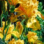 """Golden Irises"" by chloehedden"