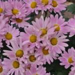 """Flowers"" by selectCRAIG"