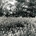 """""""Flowery Field"""" by TimWeintz"""