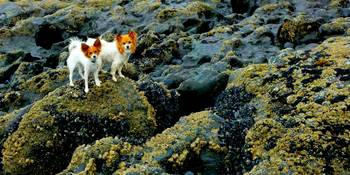 Explore The Tide Pools