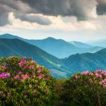 """Blue Ridge Appalachian Mountains Spring Flowers"" by DAPhoto"