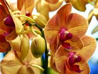 Colorful Orchids