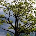 """City Tree"" by raetucker"