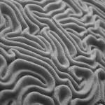"""brain coral BW"" by Mac"