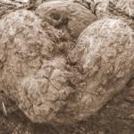 """""""Natural Heart"""" by madworld"""
