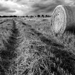 """Hay Field: Black and White"" by PaulHuchton"