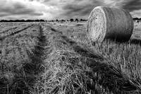 Hay Field: Black and White