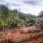 """""""Down by the Stream HDR"""" by InspiraImage"""
