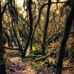 """Woodland Wandering"" by InspiraImage"