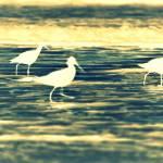 """""""Ghostly Birdies"""" by bvconrad61"""
