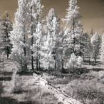 """Bryce Canyon Infrared Trees"" by miir"