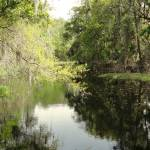 """Brooker Creek"" by spadecaller"