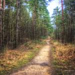 """""""Forest Path Through the Trees"""" by InspiraImage"""