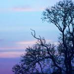 """Tree on a pastel sky"" by InspiraImage"