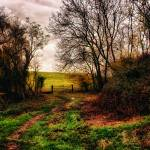 """Muddy Country Path HDR"" by InspiraImage"
