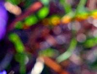 Color Abstract of Plants